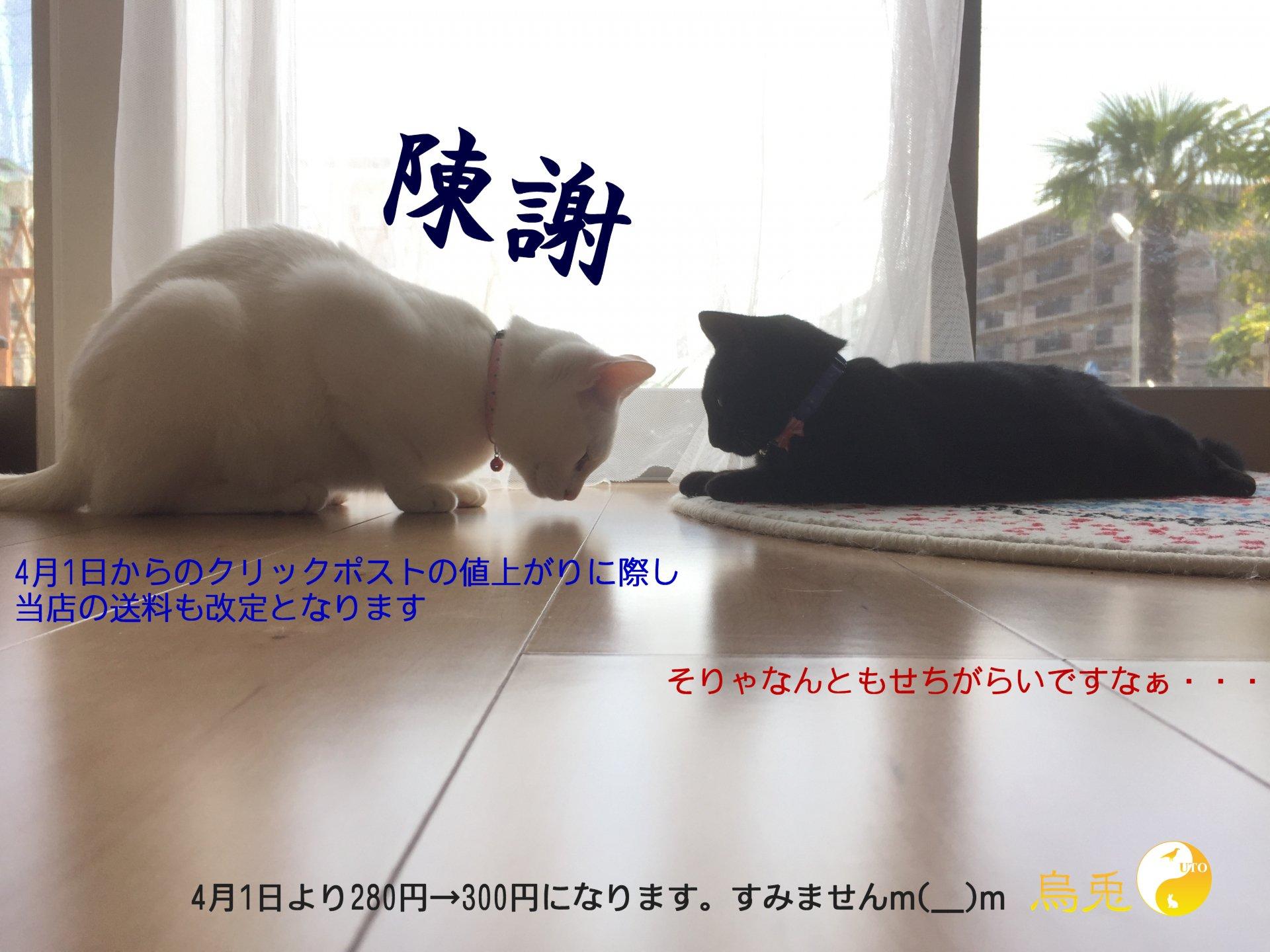 猫お詫び画像